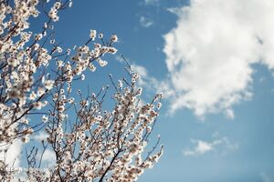 بوی خوش بهار در همدان