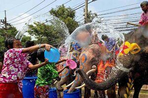 فیلم/ آببازی با فیلها در تایلند!