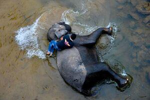 عکس/ شستشوی فیل
