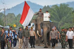 عکس/ نقش فیل در انتخابات
