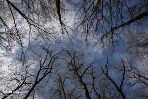 عکس/ زخم تبر بر تن درختان ارسباران