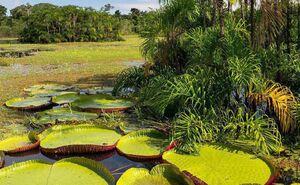 تصویری زیبا از طبیعت آمازون