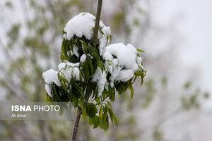 چهره زمستانی بهار در اردبیل