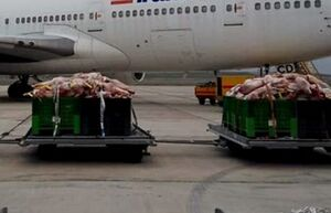۹۲ هزار کیلو گوشت گرم وارد کشور شد
