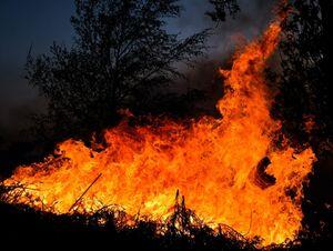 آتش سوزي در جنگلي در ايرلند شمالي