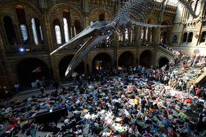 اعتراض نمادین فعالان محیط زیست در تالار موزه تاریخ طبیعی بریتانیا در لندن