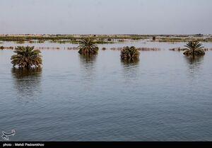 تصاویر / نخلهای خوزستان زیر آب!
