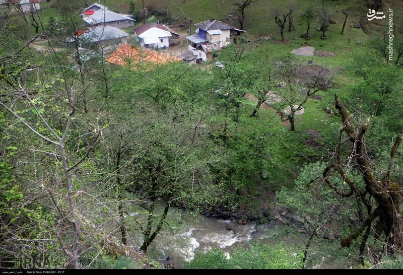 عکس/ ساخت خانه در حریم رودخانه - 7