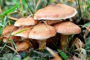 قارچهای سمی چه نشانههایی دارند؟