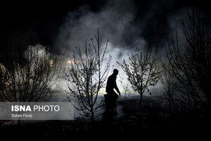 عکس/ مقابله باغداران ارومیه با سرمازدگی درختان