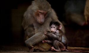 نگهداری حیوانات در باغ وحش قانونی است؟