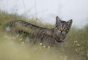نجات جالب بچه گربه در اردبیل +عکس
