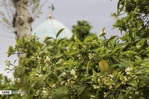 شمیم بهاری در اردیبهشت شیراز