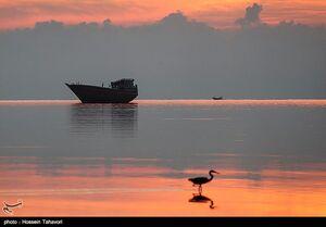 فیلم/ تجربه بهار در سواحل خلیج فارس