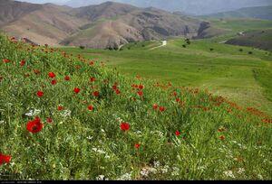 عکس/ از دیدنیهای اردیبهشت ایران