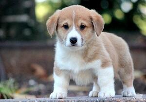 فیلم/ واردات غذای سگ با ارز ۴۲۰۰تومانی