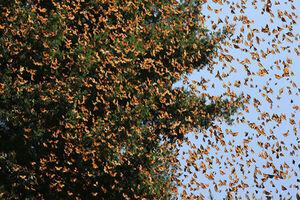 دلیل بازگشت پروانه ها به پایتخت
