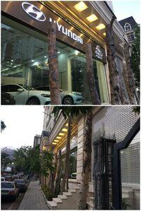 عکس/ قطع درختان مزاحم از مقابل یک نمایشگاه ماشین!