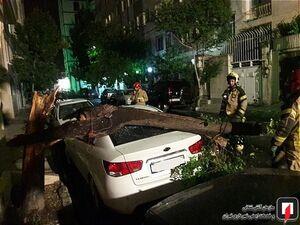 عکس/  سقوط درخت روی خودروی سراتو