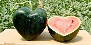 تولید محصولات کشاورزی با ظاهر جذاب