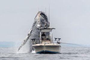 بالا آمدن حیرت انگیز نهنگ