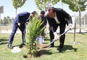 درختکاری ویلموتس در اولین حضور در ایران