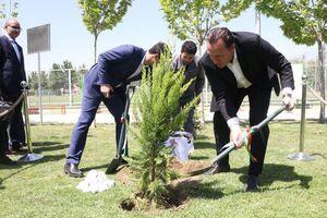 عکس/ درختی که ویلموتس در پک کاشت