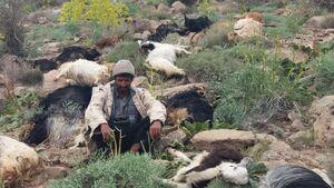 عکس/ تلفشدن گله گوسفندان بر اثر صاعقه!