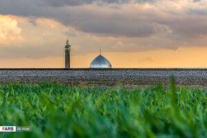 عکس/ گندمزارهای « سُرخه »