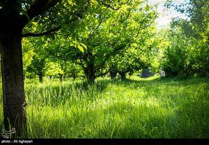 طبیعت بهاری تفرجگاه بند ارومیه