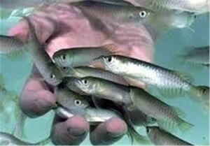 دلیل مرگ ماهیان در خوزستان بعد از سیلاب چیست؟