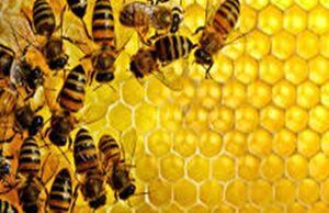 ایرانیها ۳ برابر مردمان دنیا عسل میخورند