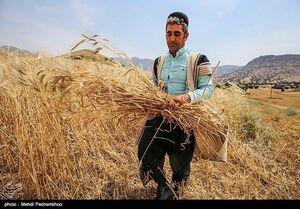 آخرین وضعیت خرید گندم از کشاورزان