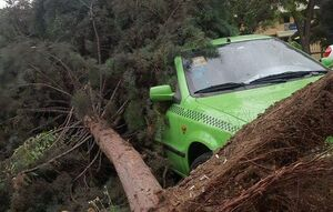 عکس/ سقوط درخت روی خودرو بر اثر طوفان تهران