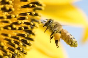 فیلم/ تصادف زنبورها!