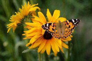 عکس/ پروانههای رنگی در آسمان بجنورد