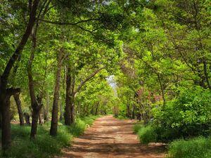 فیلم/ جنگلی دیدنی برای گردشگران تابستانی
