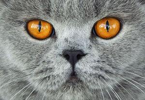 طرفداران حقوق حیوانات این گربه را دیدهاند؟ +عکس