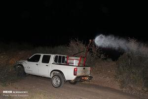 عکس/ مبارزه شبانه با ملخ های صحرایی