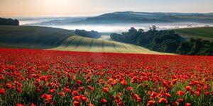 عکس/ چشماندازی زیبا از یک مزرعه