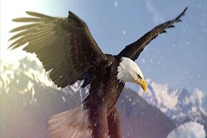 فیلم/ شنای عقاب در رودخانه!