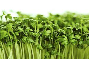 یک سبزی معروف و این همه ضرر