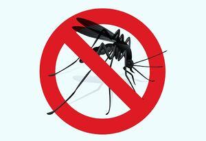 رازهایی که پشهها از شما پنهان میکنند!