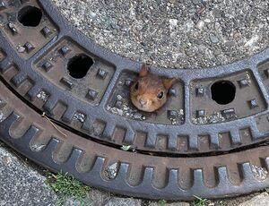 عکس/ گیر کردن گردن سنجاب بازیگوش
