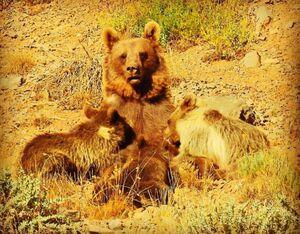 عکسی دیدنی از حیات وحش مازندران