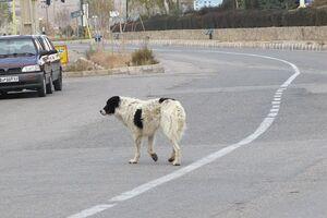تایید کشتار غیراخلاقی سگها توسط شهرداری تهران