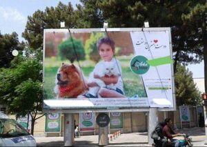 تبلیغ سگبازی در سبزوار +عکس