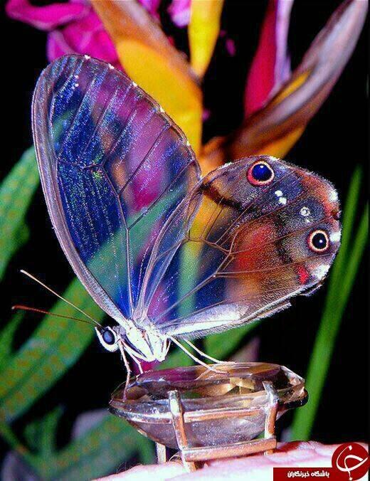 چند نوع پروانه در آسمان بال میزنند؟