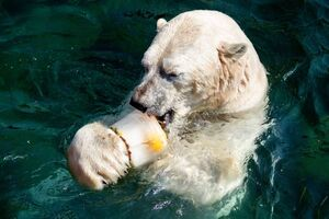 عکس/ خوراکیهای تابستانی حیوانات باغ وحش