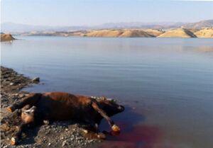 """شیوع """"بیماریهای مهلک"""" در پی کشتار اسبهای قاچاقچیان +عکس"""